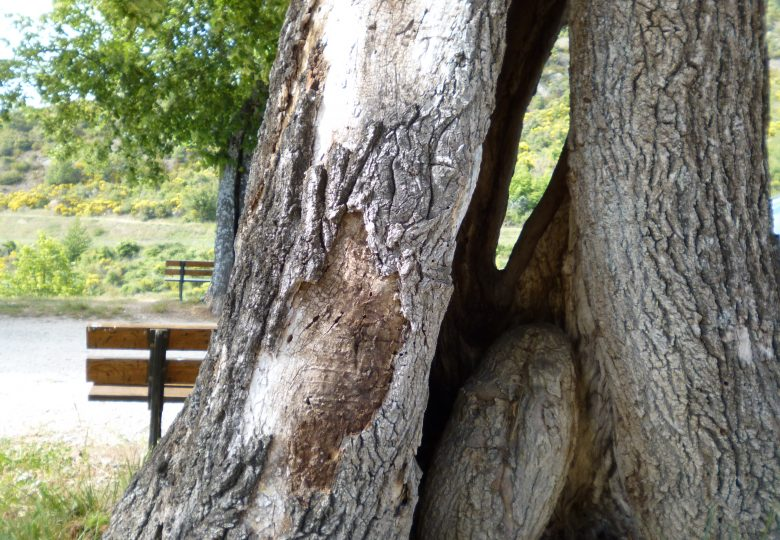 Les arbres se parlent - vidéo